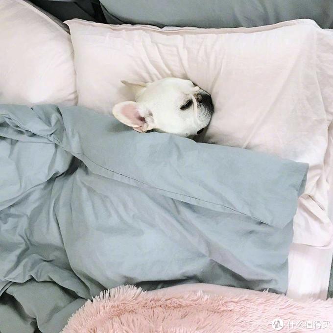 【困成狗】80.90后的年轻人,为什么睡个好觉就这么难?
