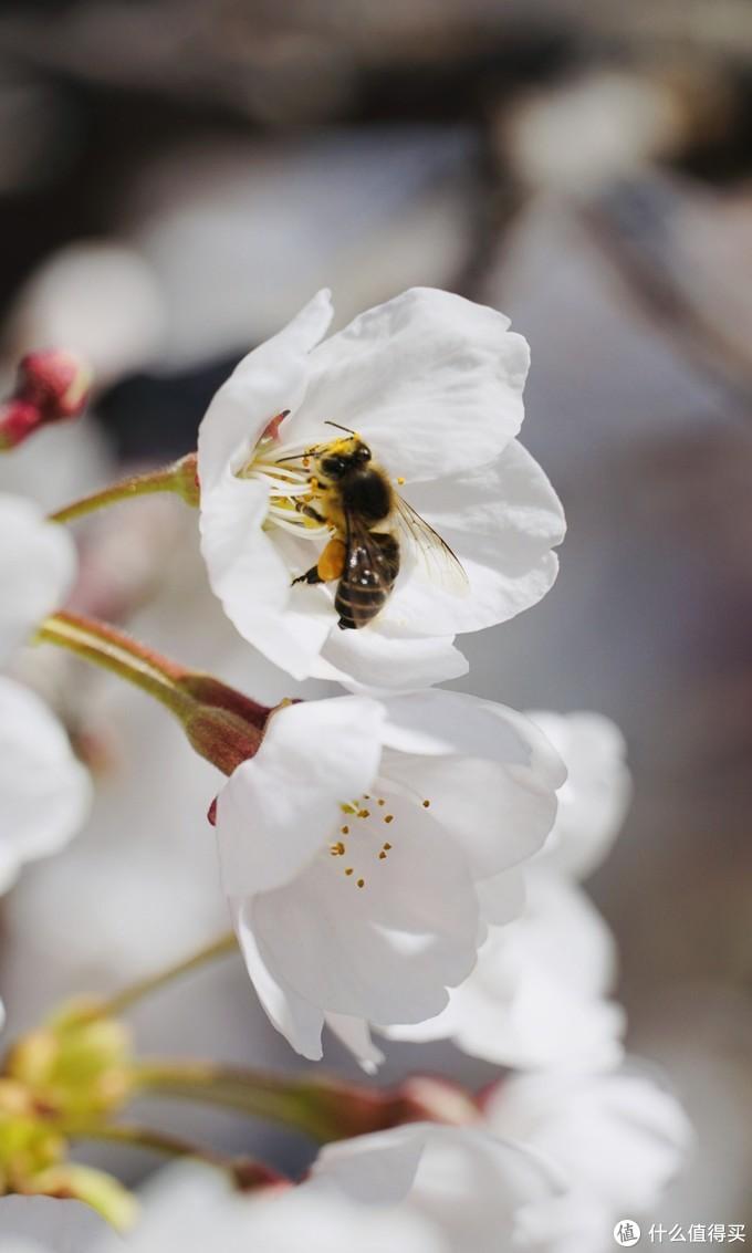 春天来了,给你一份拍花的小技巧
