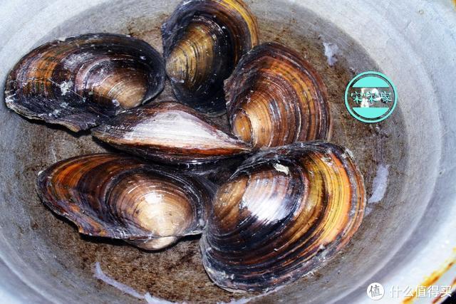 河鲜里就属它难做,但做好了,鲜嫩不腥又美味,常吃对眼睛好