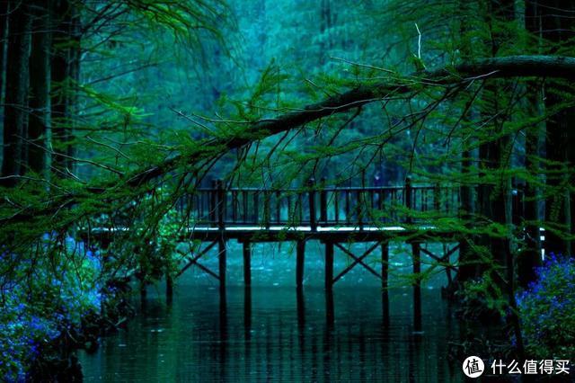 人民网点赞,距南京不到3h,中国最美水上油菜花田,终于藏不住了