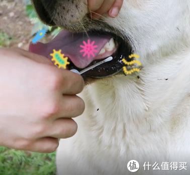 面包可以缓解狗狗口臭、蛀牙问题?实验亲测!