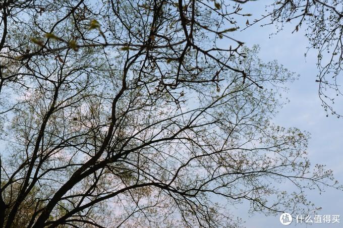 黄四娘家花满蹊,千朵万朵压枝低。500元相机记录的满屏春光献给宅家的你
