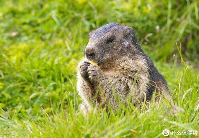 5种动物香料98%的香水中都有,你知道几种?