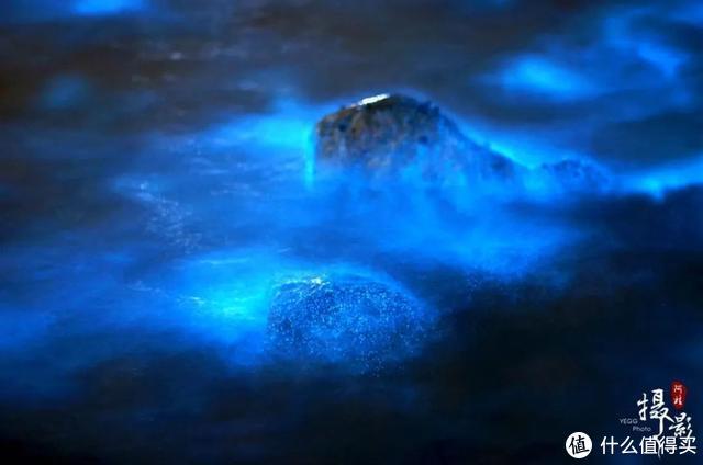 """2020第一波""""蓝眼泪""""提前出现!中国这个小众海岛刷爆全网!"""