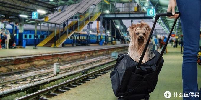 能够带着宠物去旅行,也太幸福了吧