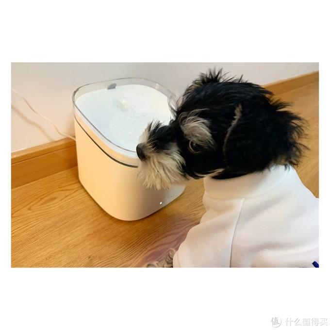 智能宠物饮水机本该如此