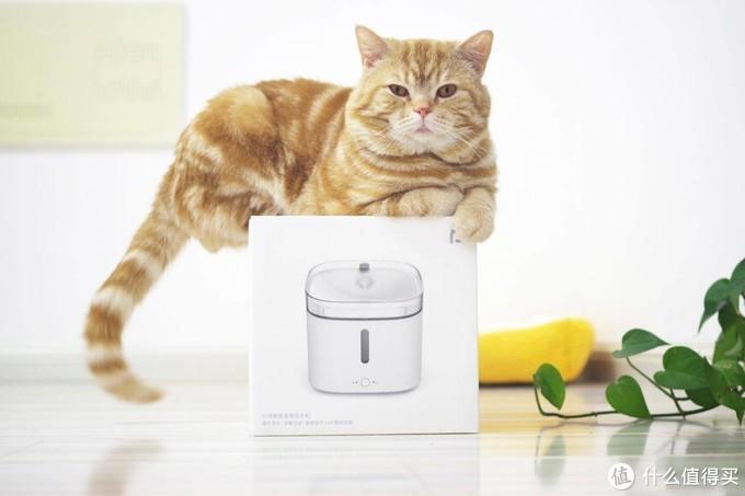 小米众筹宠物智能饮水机,方便了你,健康了宠物