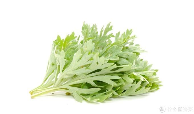 春日里不可错过的16种野菜,顺时而长最健康,看见了赶紧带回家,菜钱都省了