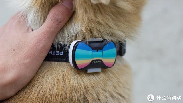 宠物界的儿童手表,这款宠物定位器超好用