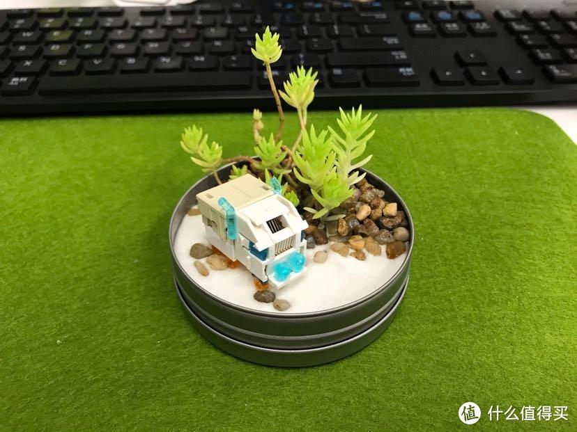闲置物品再利用!超简单的桌面DIY,为你的生活多填一份自然