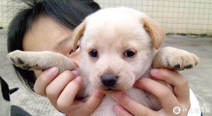 我生命里的第一条狗——小花