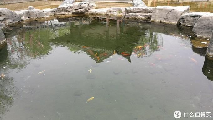 这些年走过的城市与山水——泰山、济南篇