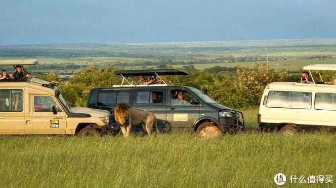 颜面尽失的猎豹和狮子