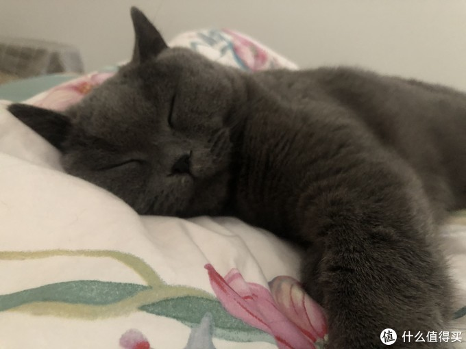 新手养猫指南——养猫一年我花了多少钱?看完我震惊了