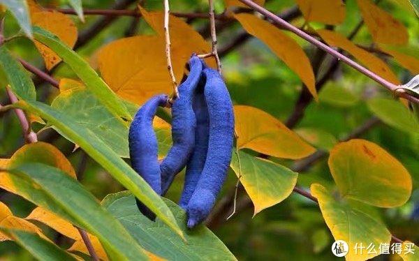 """【行家来了003期】当植物学博士跟""""吃""""较上真儿,细数那些惊掉人下巴的水果冷知识!"""