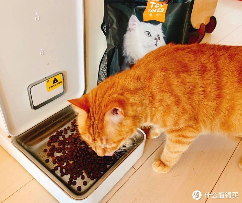 测评||养猫10年,7种国产猫粮实物测评