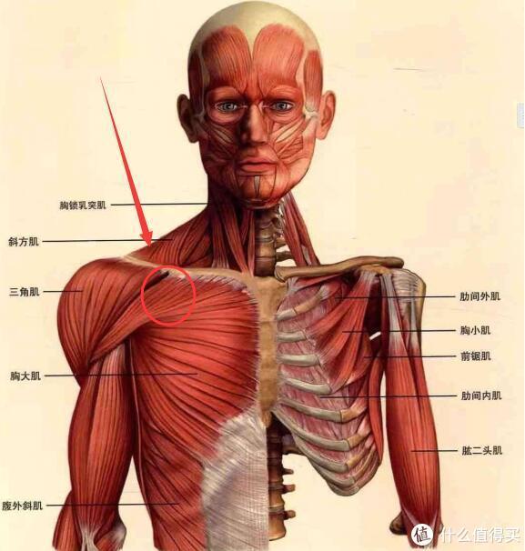 口腔溃疡、颈椎供血不足(偶尔眩晕)、高低肩、脂肪肝我是这样搞定它们的