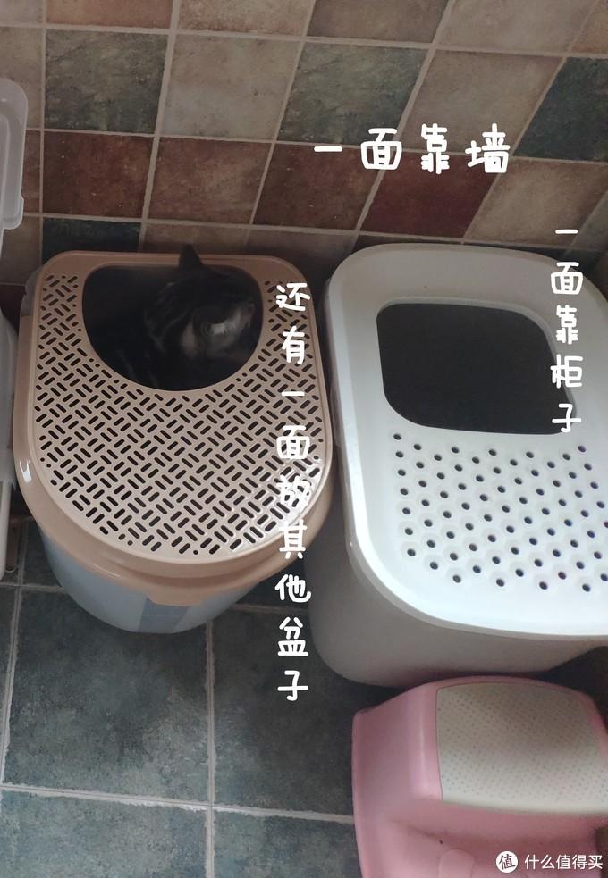 给猫设计合理的行动线,让他无路可走