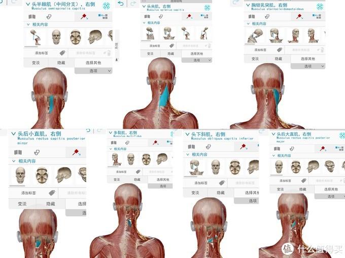 一觉醒来落枕、肩颈酸痛?睡姿与枕头对于颈椎的影响有多少,今天为你揭晓。