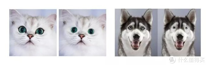 不信你看看可爱的猫猫和憨憨的二哈