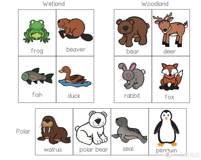 动物属性卡