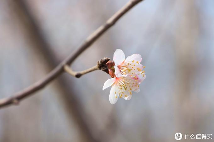 摄影技巧·春季拍花 如何让花卉更动人
