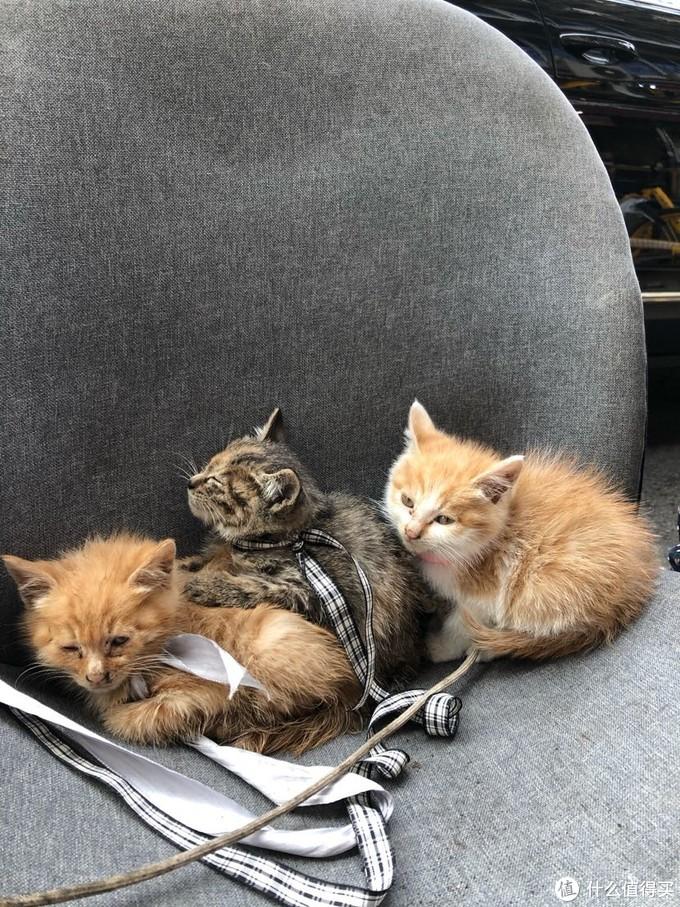 路边的三只小可爱