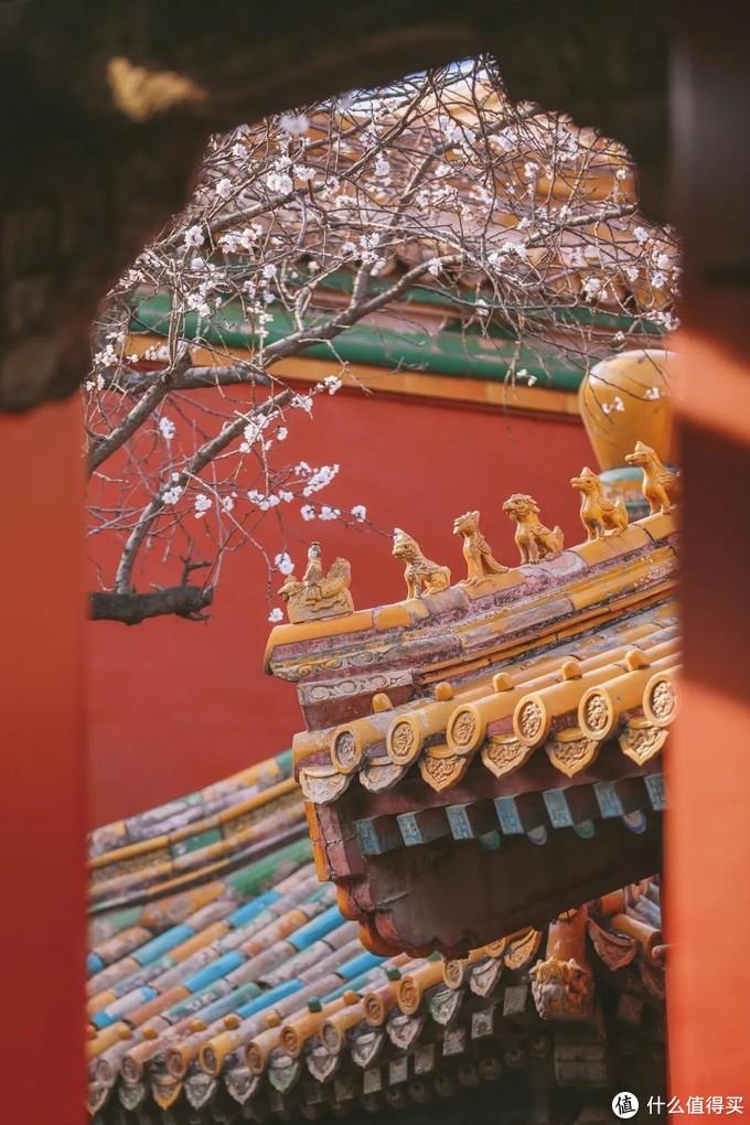 张张惊艳!美女摄影师拍出刷屏故宫照,这是我所见过最温柔的故宫!