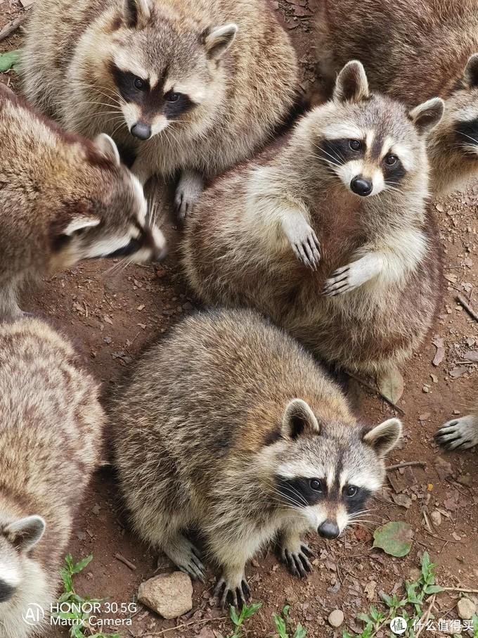 数懒小姐姐-带上荣耀30 逛动物园 动物原来离我们都这么近