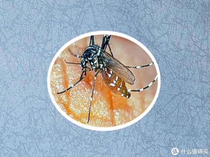 9种驱蚊水有效含量大PK,及手把手教你驱蚊水DIY