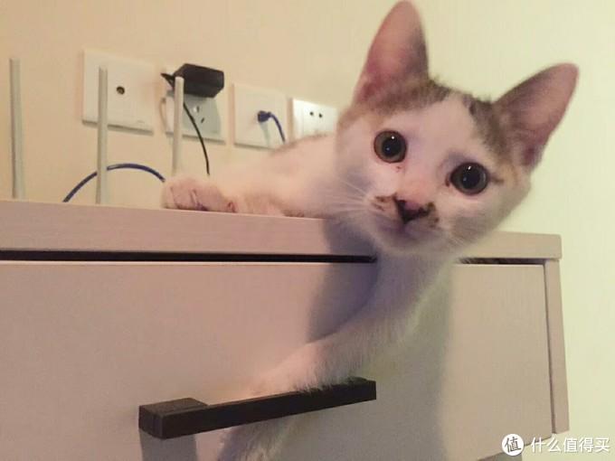 亲,你想要什么,我给你拿…… (亲戚家的猫……)