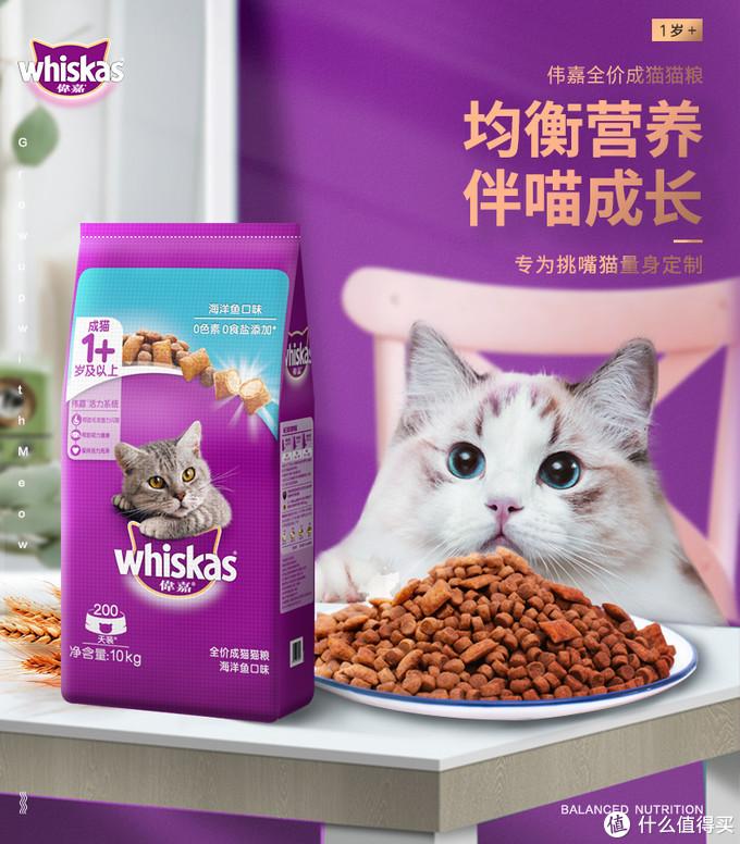 7千字长文,告诉你猫咪的方方面面
