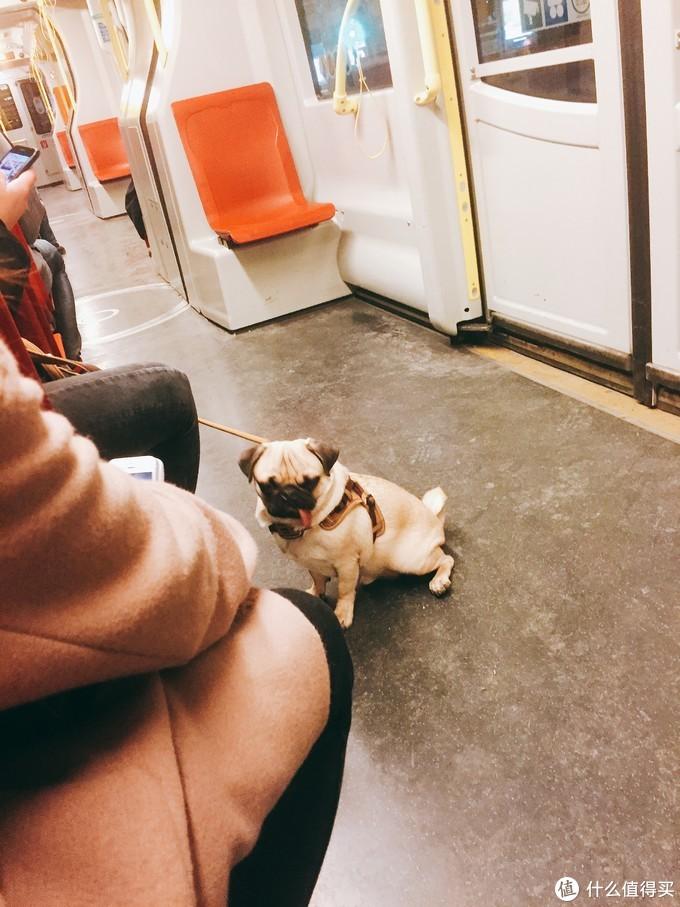 地铁上吐舌头的八哥