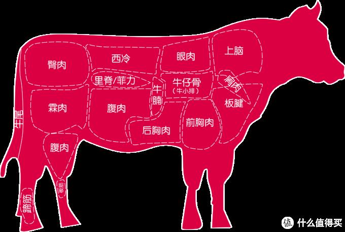个人纯手绘大概的牛肉分布图,肉品比例有不对大家容忍