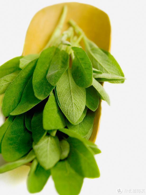 园艺新手都可轻松种植的10种香草,有了它们厨艺都增色了不少~