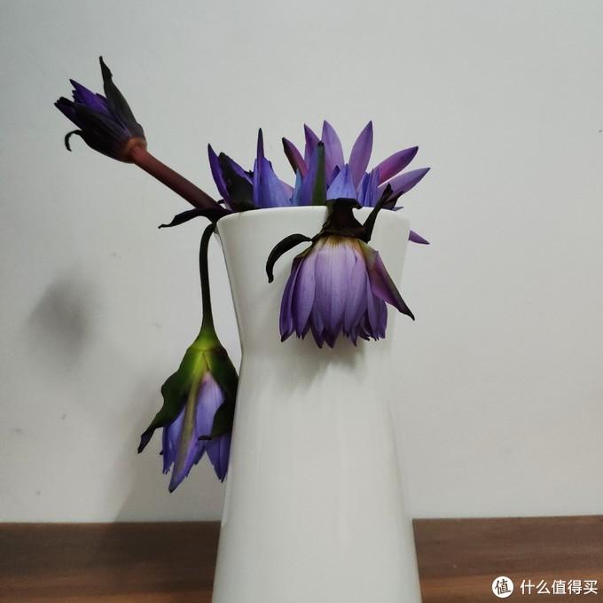 夏季鲜花不耐放,如何让家里又美又治愈?看看这些新晋网红鲜切植物
