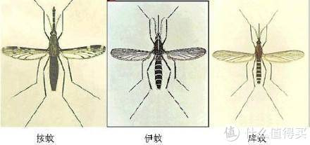 值无不言258期:全是辛酸泪,一个备受蚊子欺凌的胖子的夏日灭蚊驱蚊经验