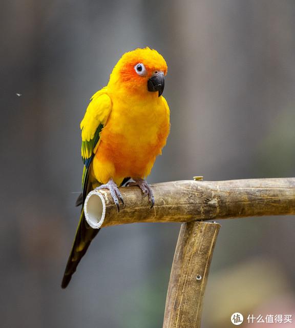 萌化了的小鸟们---肥啾啾和朋友们盲盒产品开箱