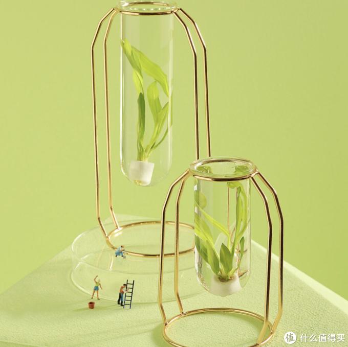 花加水培绿植套装上架  成为别出心裁的桌面风景