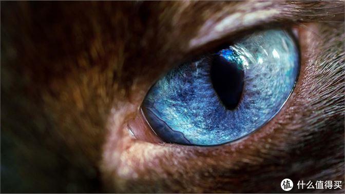 """微软发布主题名为""""Wild Eyes Premium""""高清壁纸包,内附下载地址"""