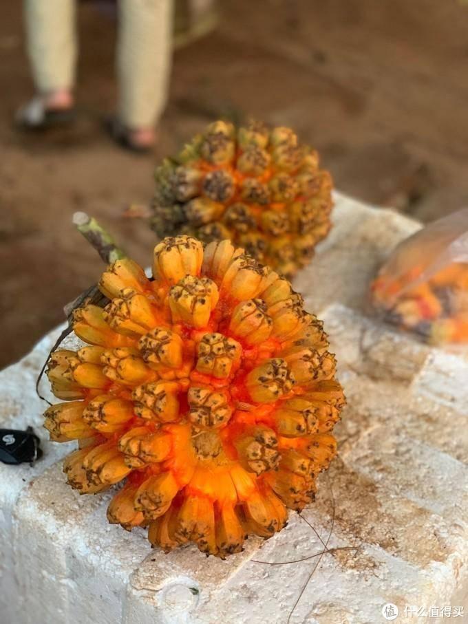 北部湾的岛产水果,来看看你吃过几种?附网购邮寄攻略~