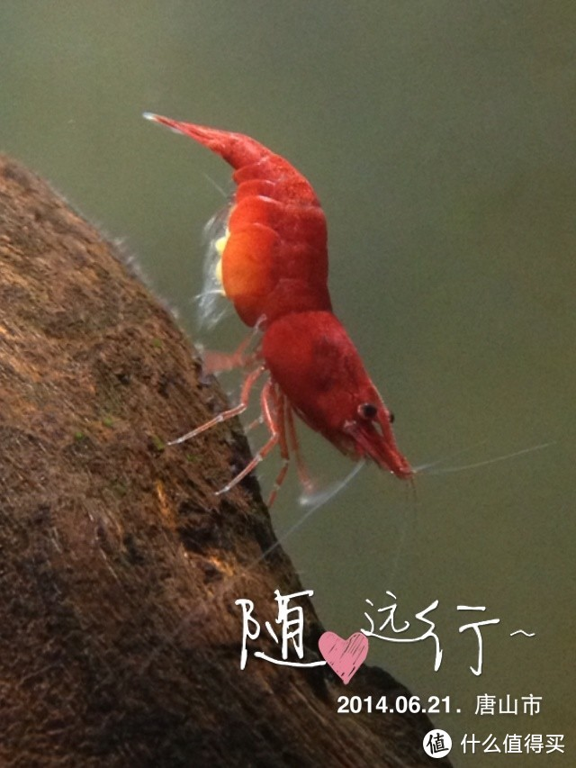 一个老男孩的养鱼跳坑流水账,兴趣爱好是一辈子的事,坚持就是胜利!