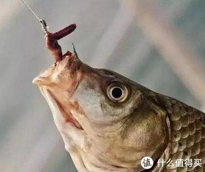 一篇文章解答了多年的疑惑:蚯蚓不在水中,为什么鱼类却喜欢吃它?