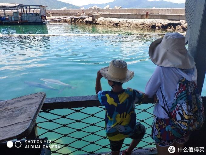 母子看海豚母子