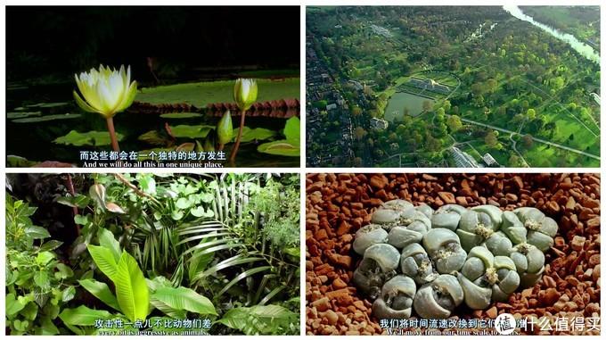 俯瞰地球!B站八部神级纪录片,带你领略大自然与动物之间的极致美感!(内附链接,赶集收藏)