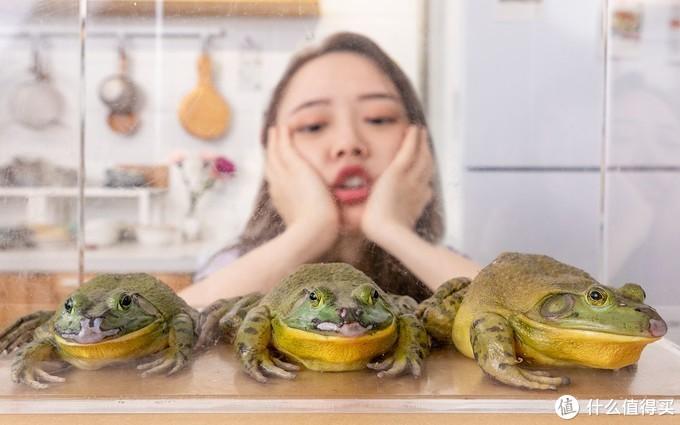 【视频】一只牛蛙一张嘴,两只眼睛......诶被我吃掉了腿!!!