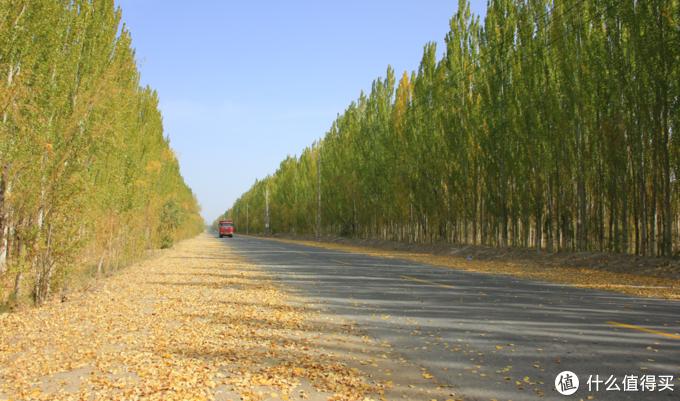 阿克赛哈萨库族自治县的银杏路