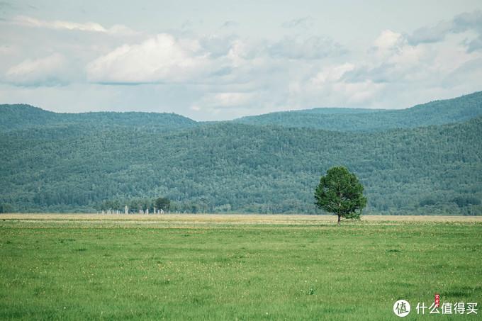 看到孤独的树