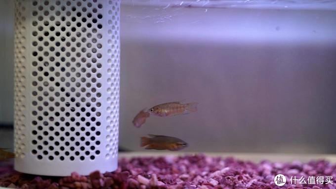 躺着就把鱼给喂了,智能黑科技养鱼是种什么体验。