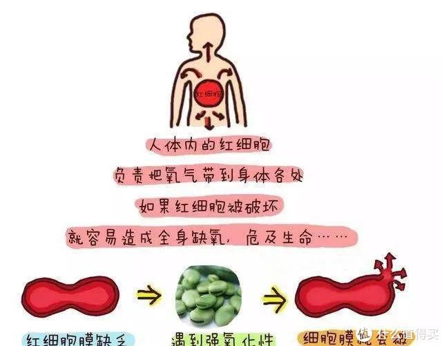 核保案例(七):蚕豆病